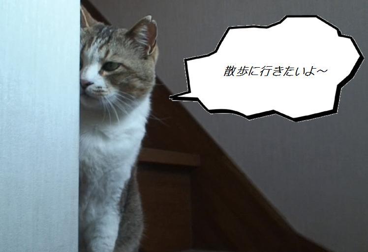 Chibi001_3